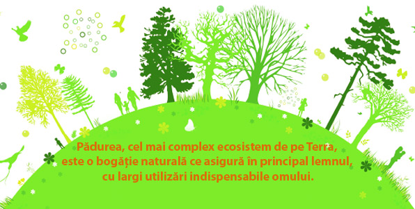 lemn-padure ecologica