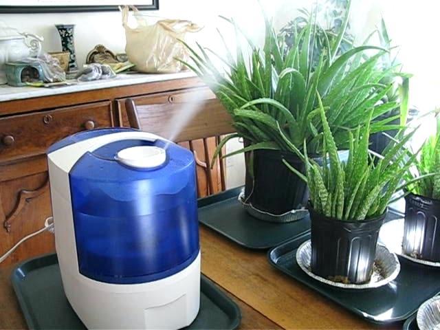 Plante - Umidificare