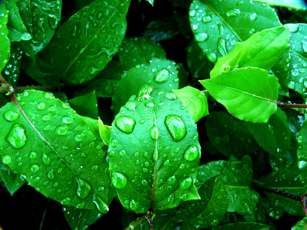 Plantele si umiditatea