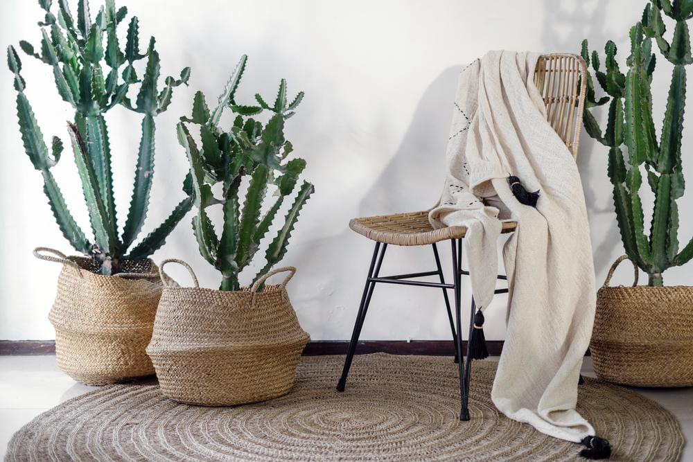 decoratiuni naturale living modern