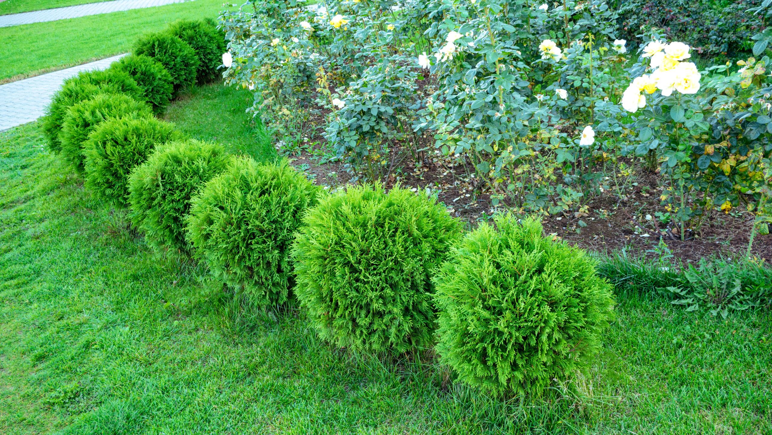 Alege cu atentie plantele perene din gradina