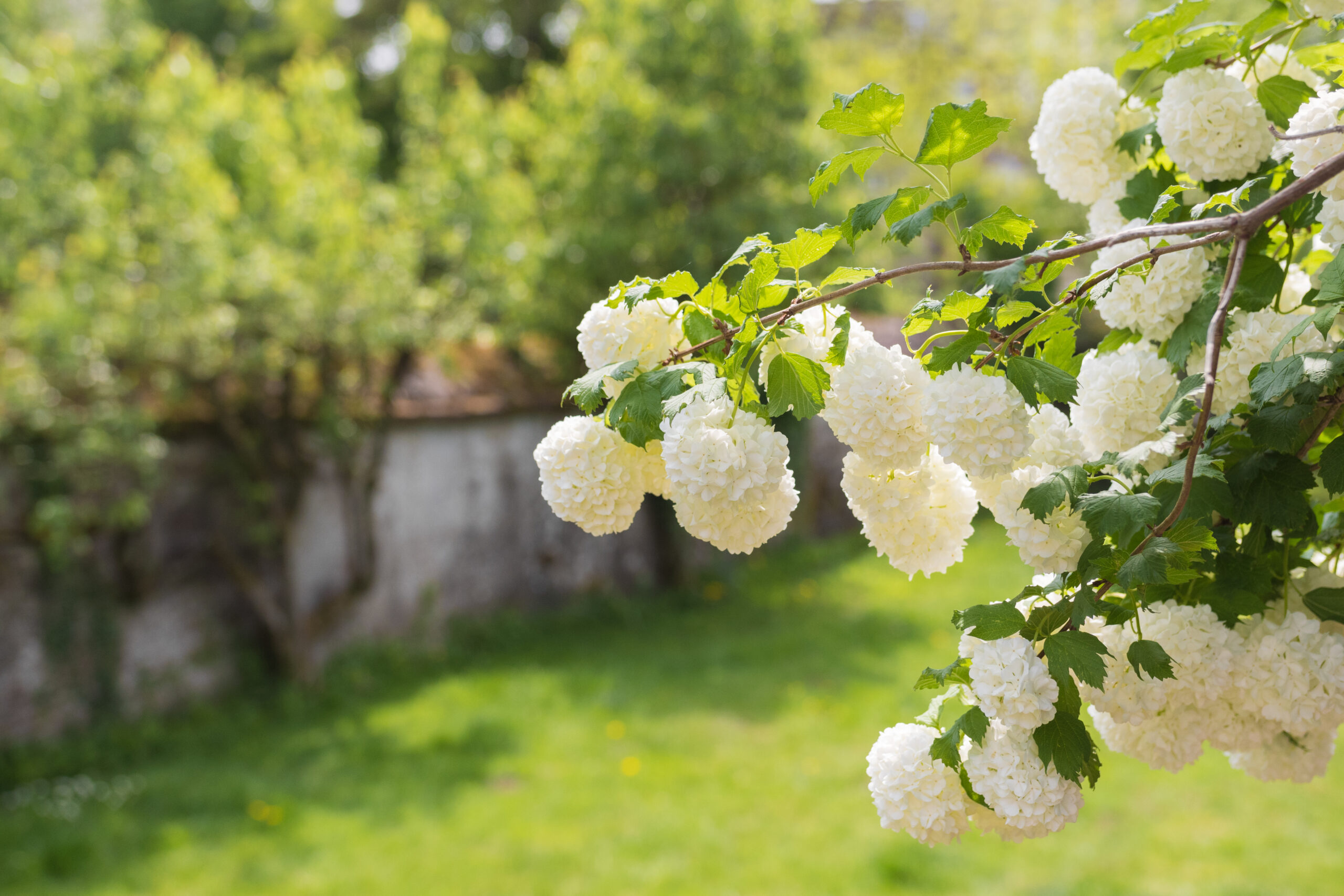 Arbustii ornamentali sunt alegerea cea mai buna