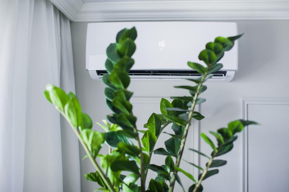 Purificarea aerului prin plante